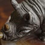 Носорог. Крупным планом