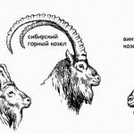 Различные виды козлов