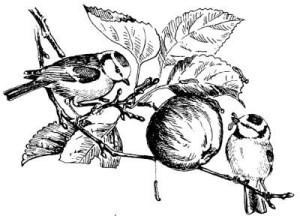 Рисунок Лазоревки - к предмету венской бронзы.