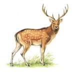 рисунок оленя к статье о венской бронзе
